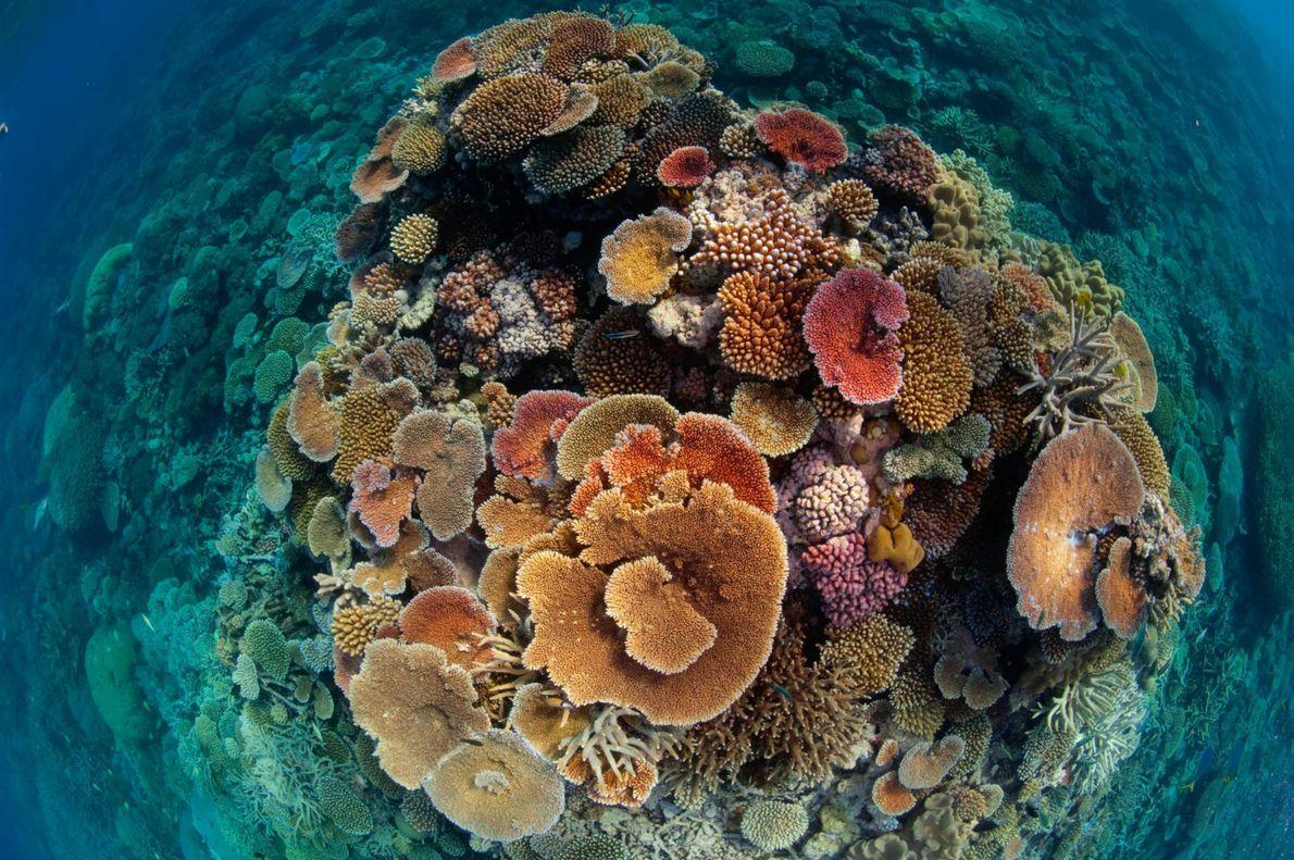 Corais coloridos