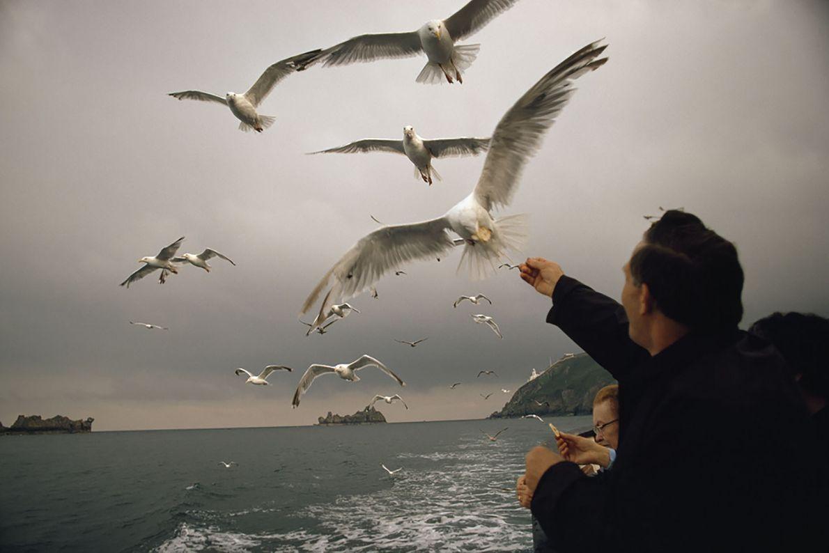 Banquete Voador