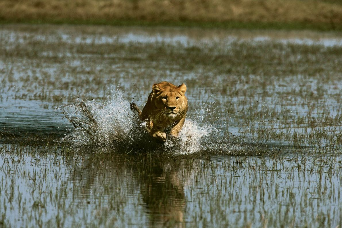 A Correr Esfomeada
