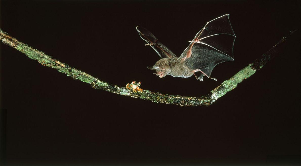 Sinal do Morcego