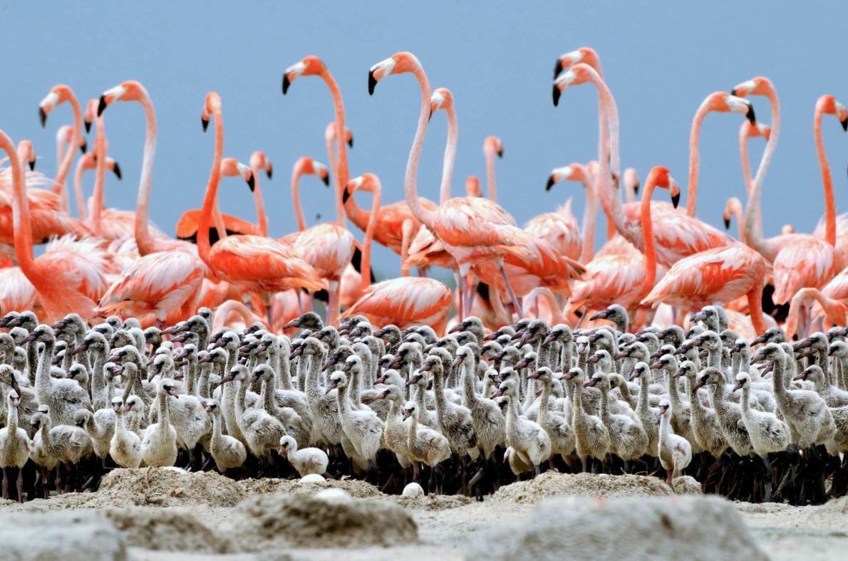 Bando de Flamingos