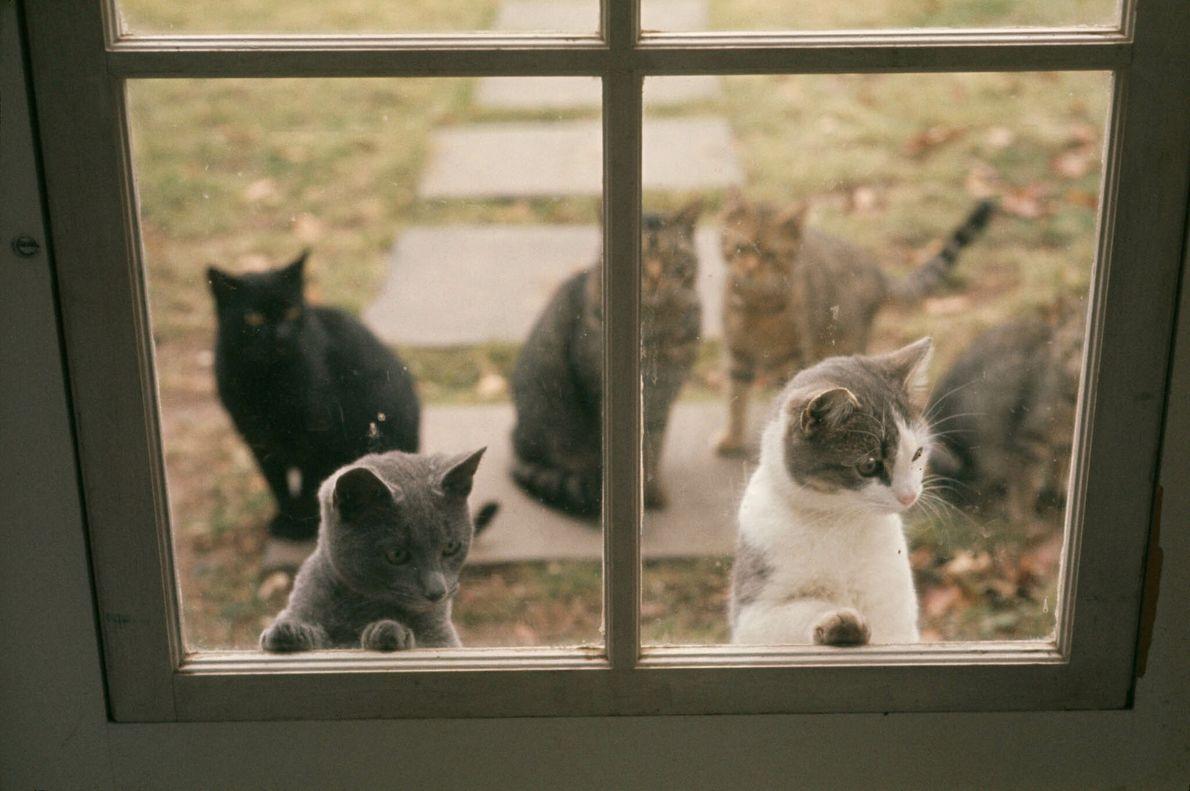 Gatinhos Curiosos