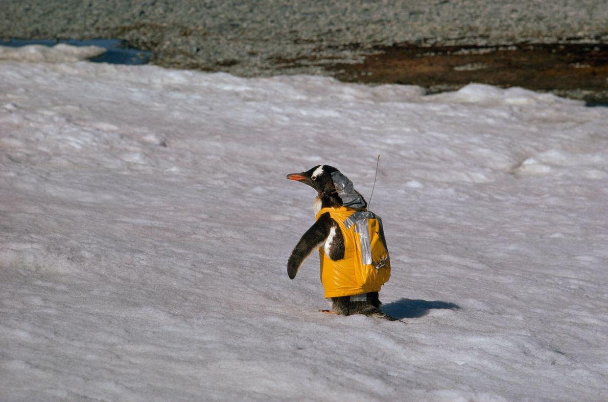 Mochila do Pinguim