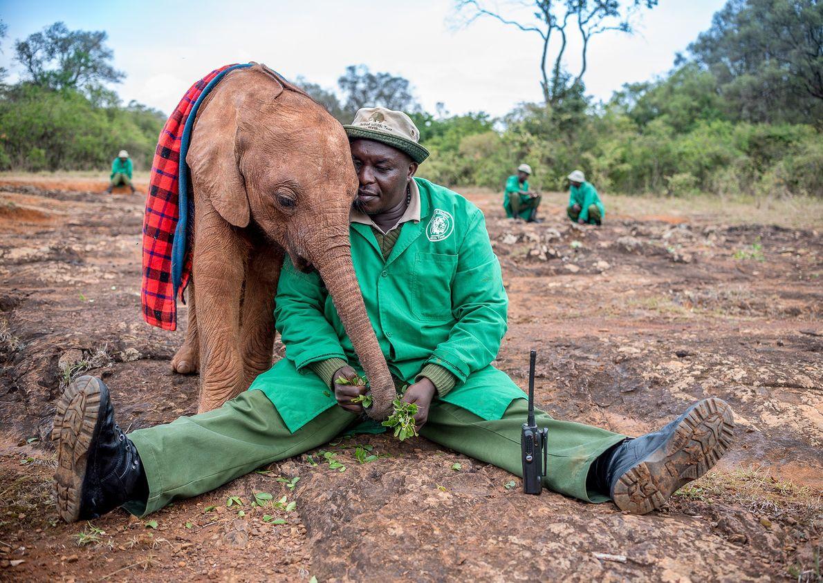 Fotografia de uma cria de elefante e do trabalhador de uma reserva no Quénia