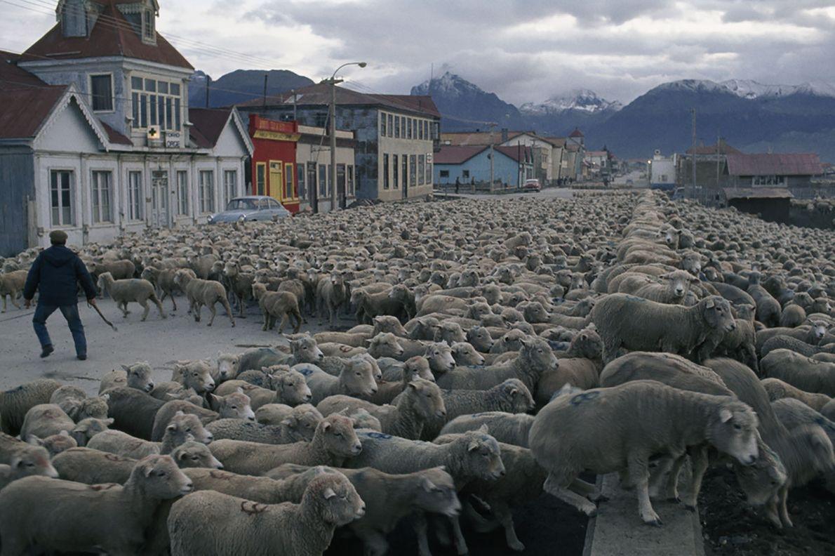 Expedição de Ovelhas