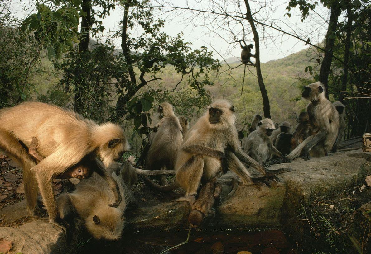 A Fazer Macacadas