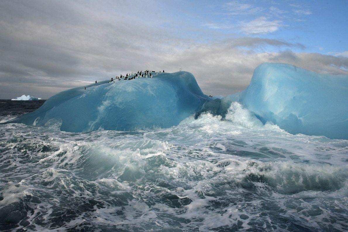 Paraíso de Pinguins