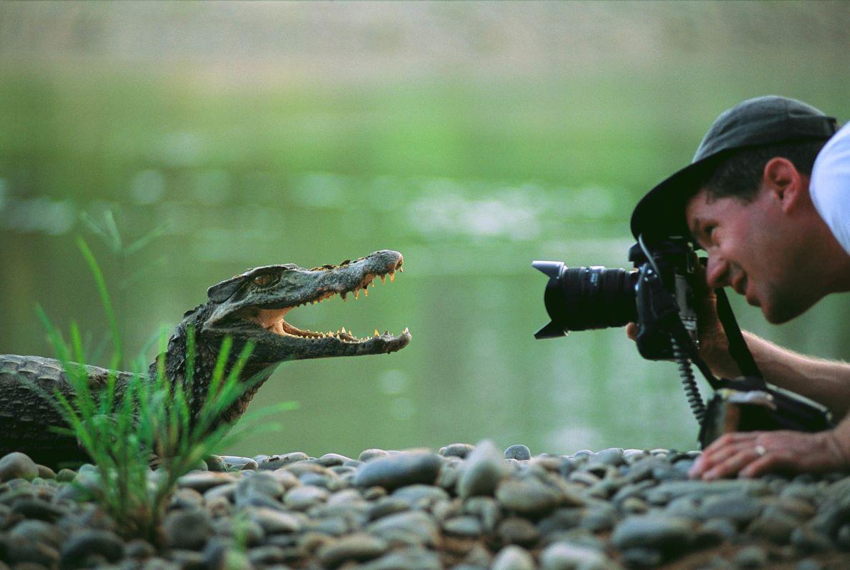 FOTOGRAFAR O FOCINHO O fotógrafo da National Geographic Joel Sartore aproxima-se e fotografa um jacaré bebé no Parque Nacional ...