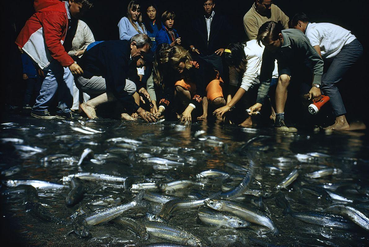 Corrida ao Peixe