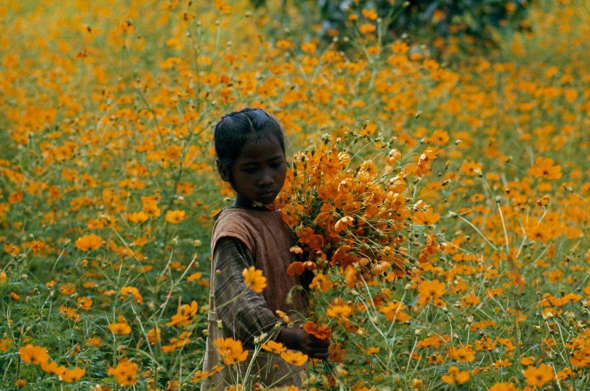 Criança das Flores
