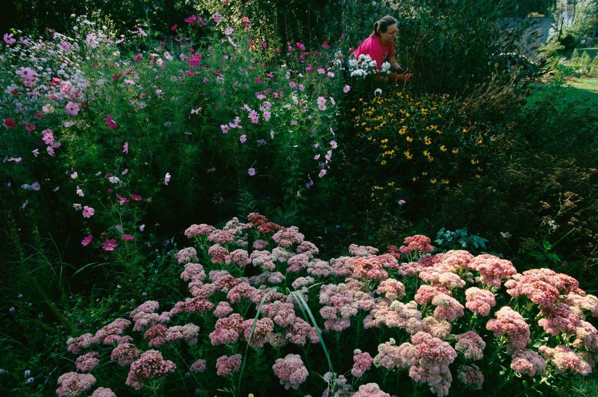 Jardim das borboletas