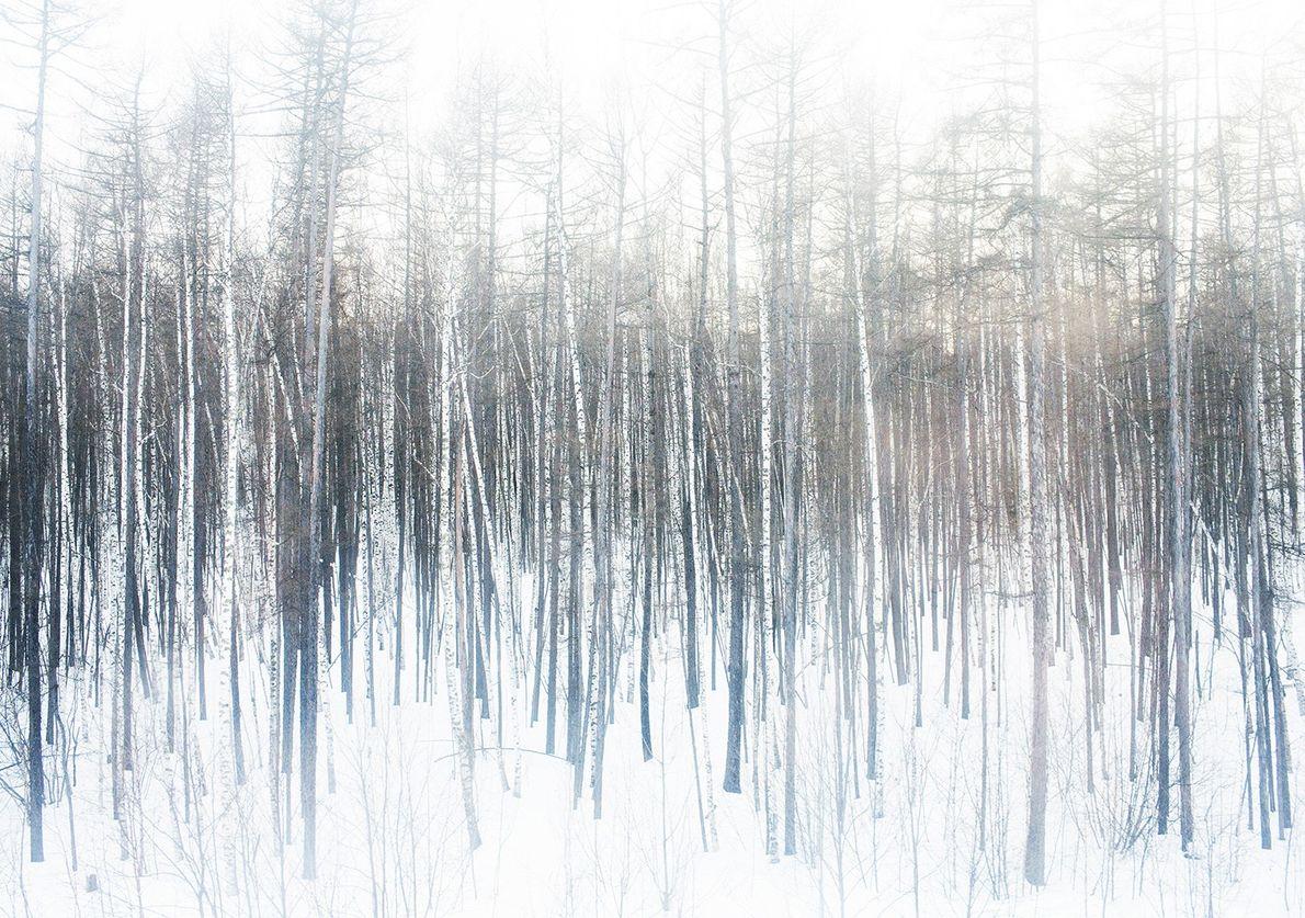 Floresta Quieta