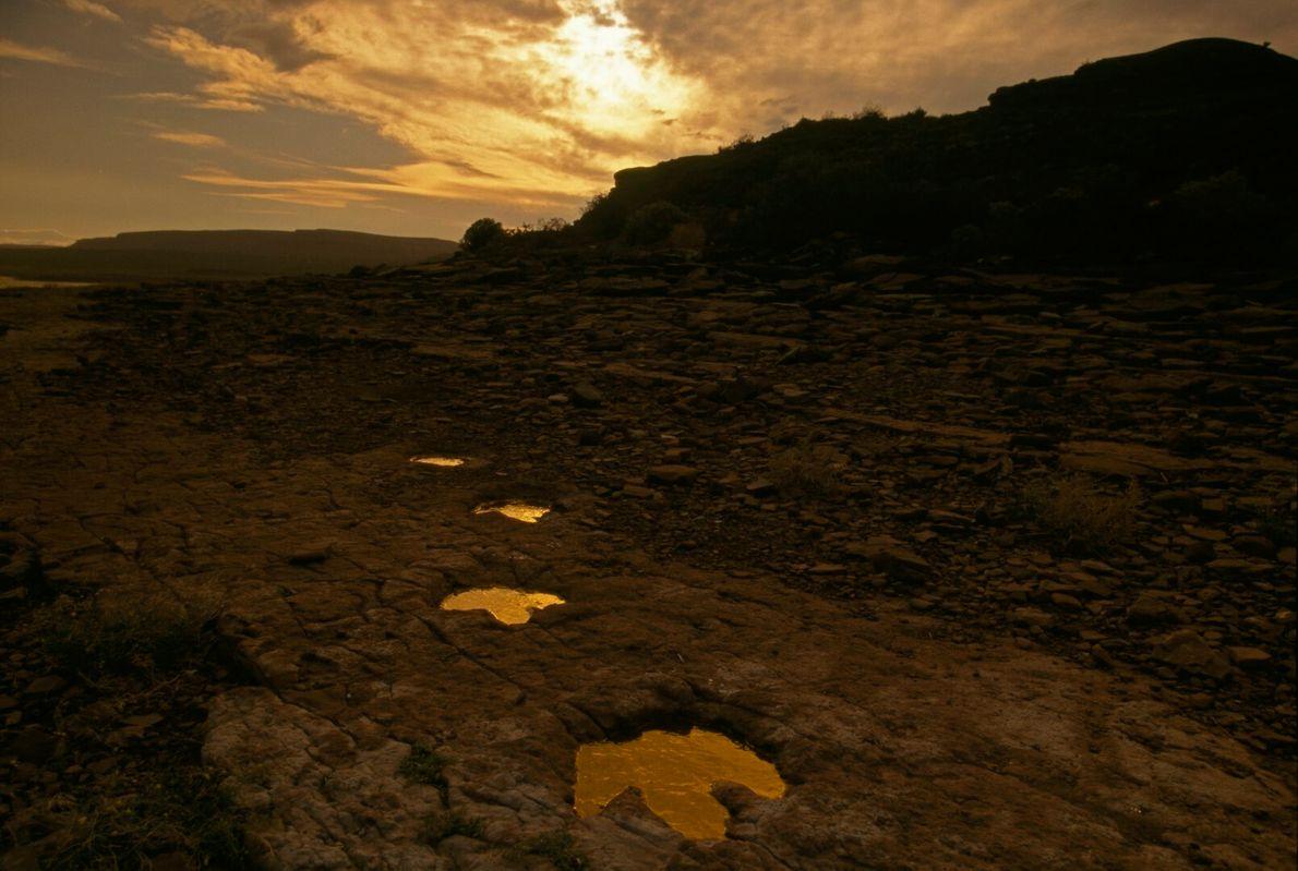 Pegadas fósseis