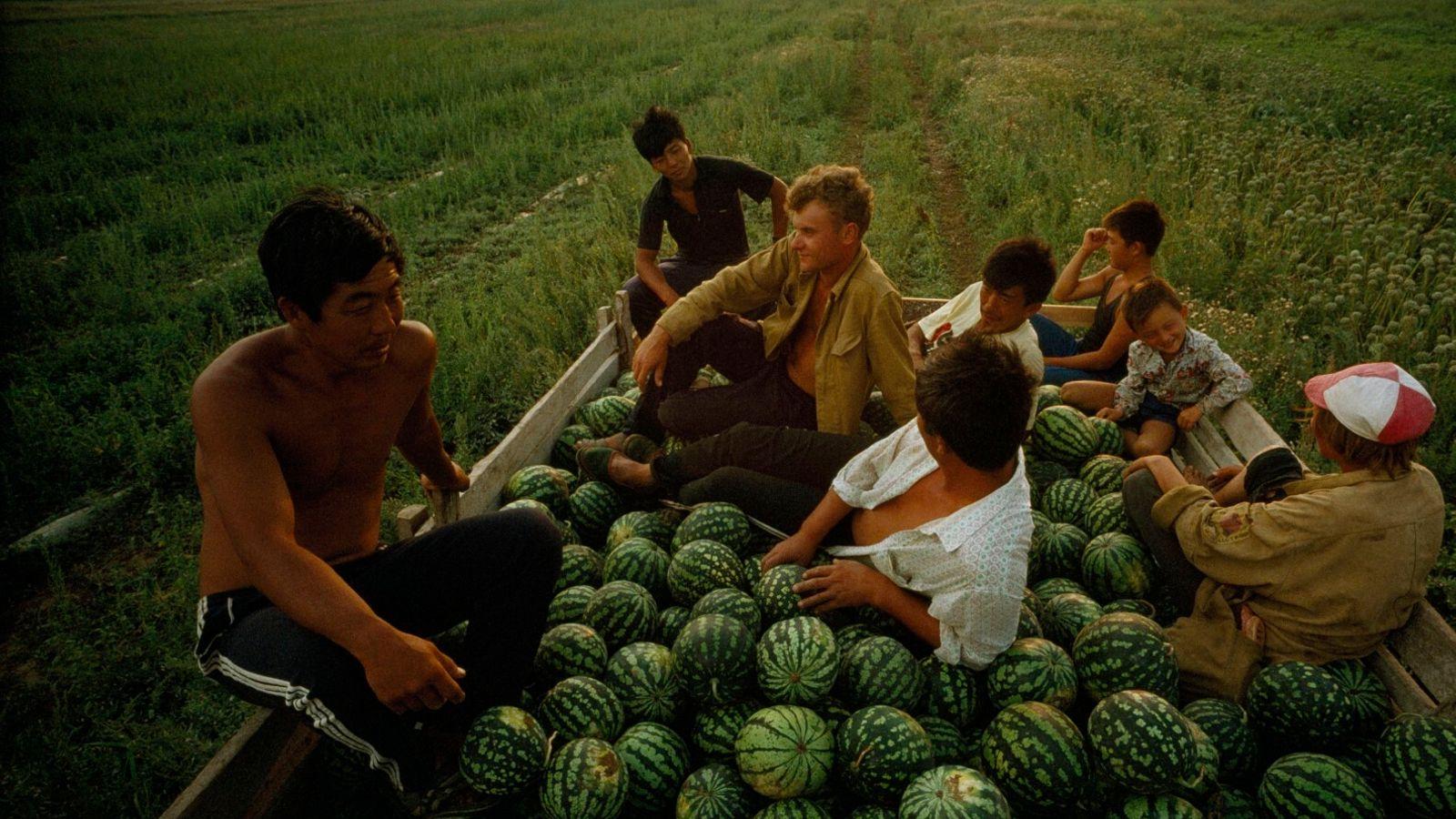 Agricultores de melancia