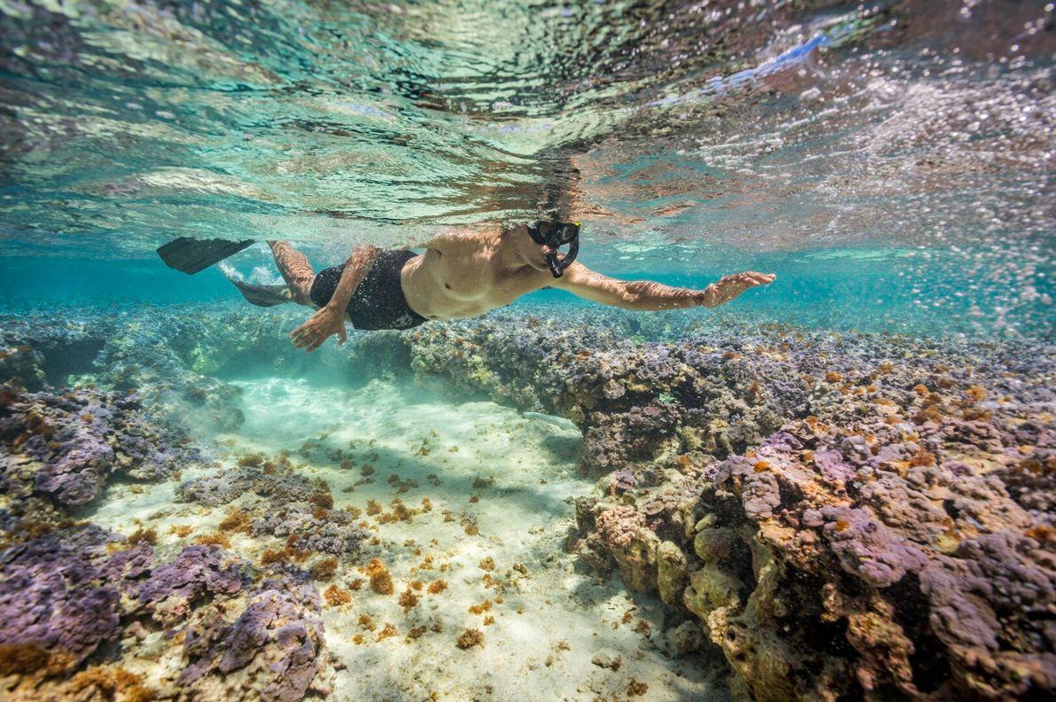 Snorkeling com Obama