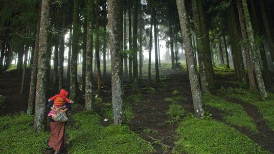 Caminhada na floresta