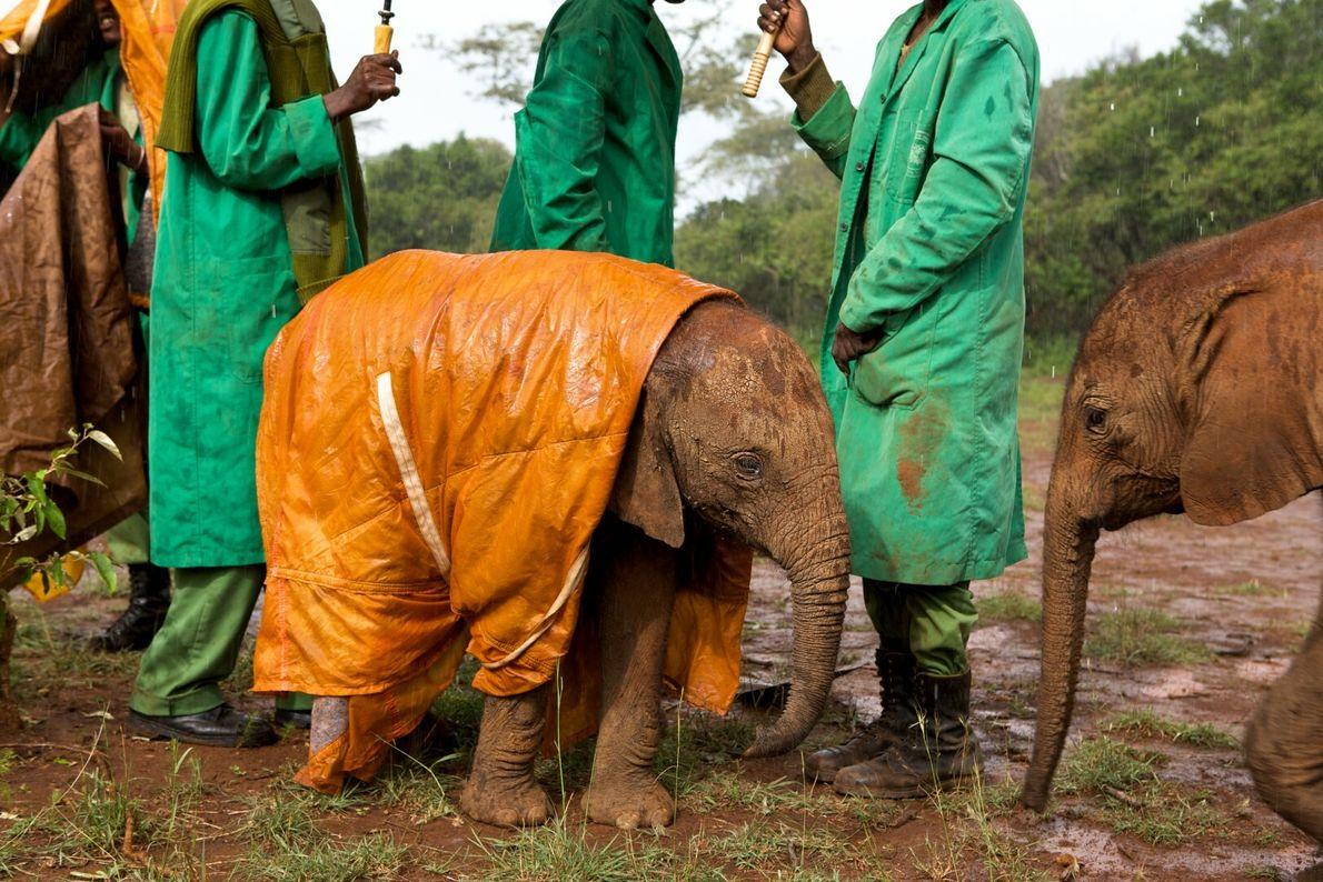Órfão elefante