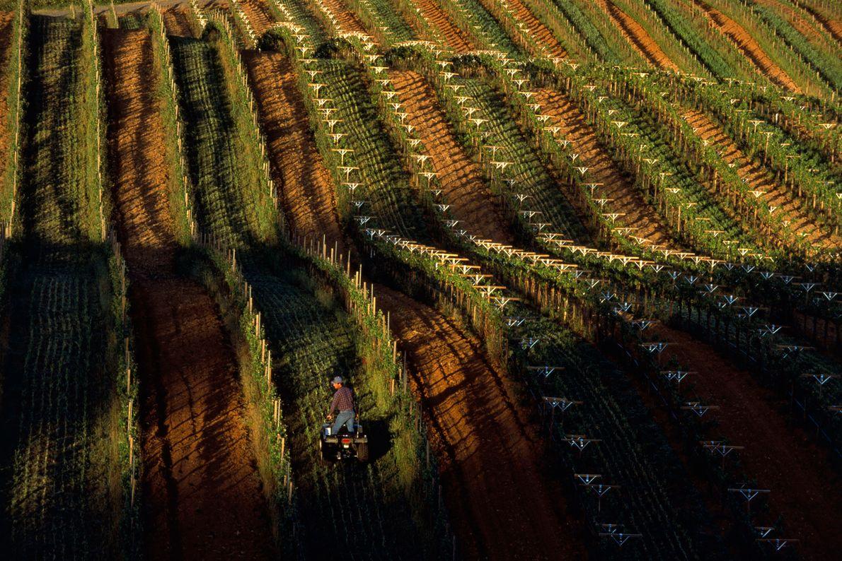 Terreno Cultivado