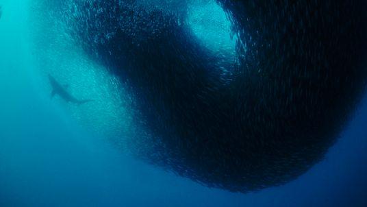 Ceia de sardinha