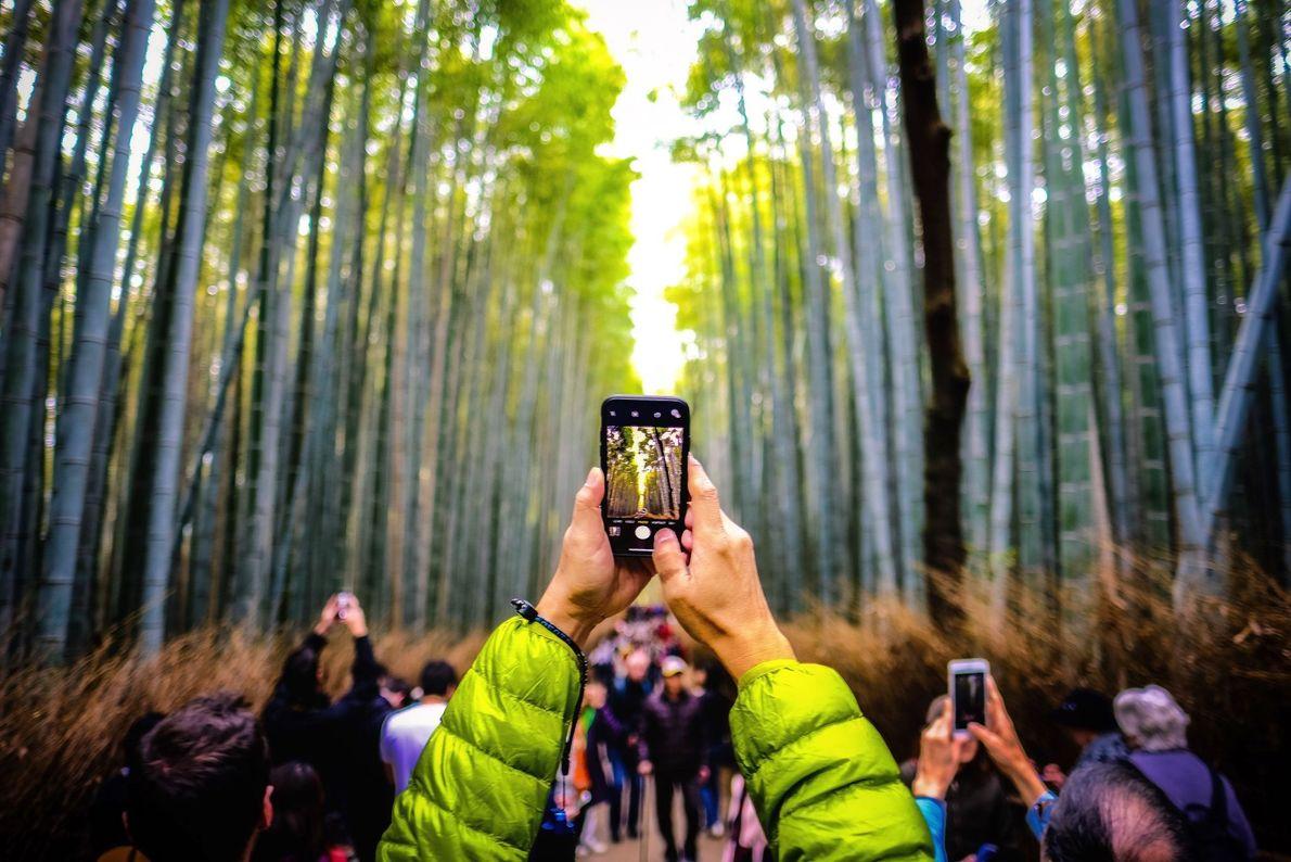 Fotografia da Floresta de Bambu de Arashiyama em Quioto, no Japão