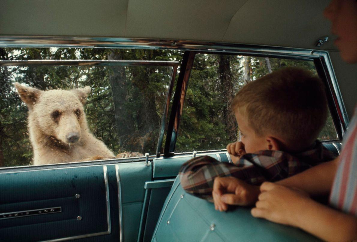 Olhos no urso