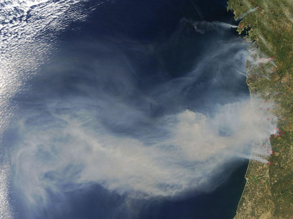 Musgo Conserva Solo Após Incêndios Florestais