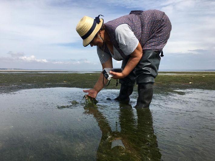 Uma das pescadoras que integram o projeto Guardiãs do Mar durante a monitorização às pradarias marinhas ...