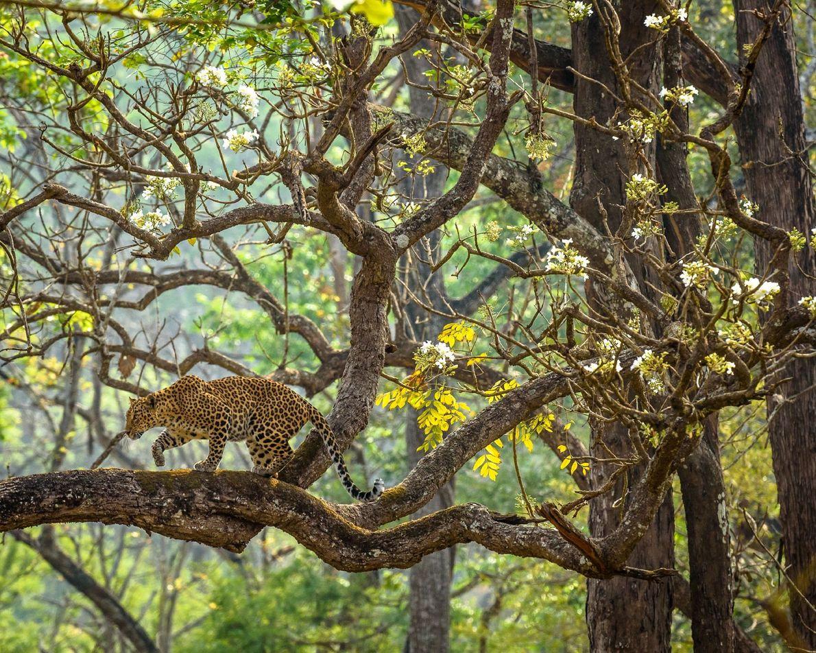 RESERVA DE TIGRES NAGARAHOLE, ÍNDIA