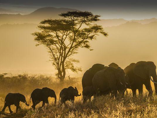 30 Imagens Deslumbrantes de Vida Selvagem