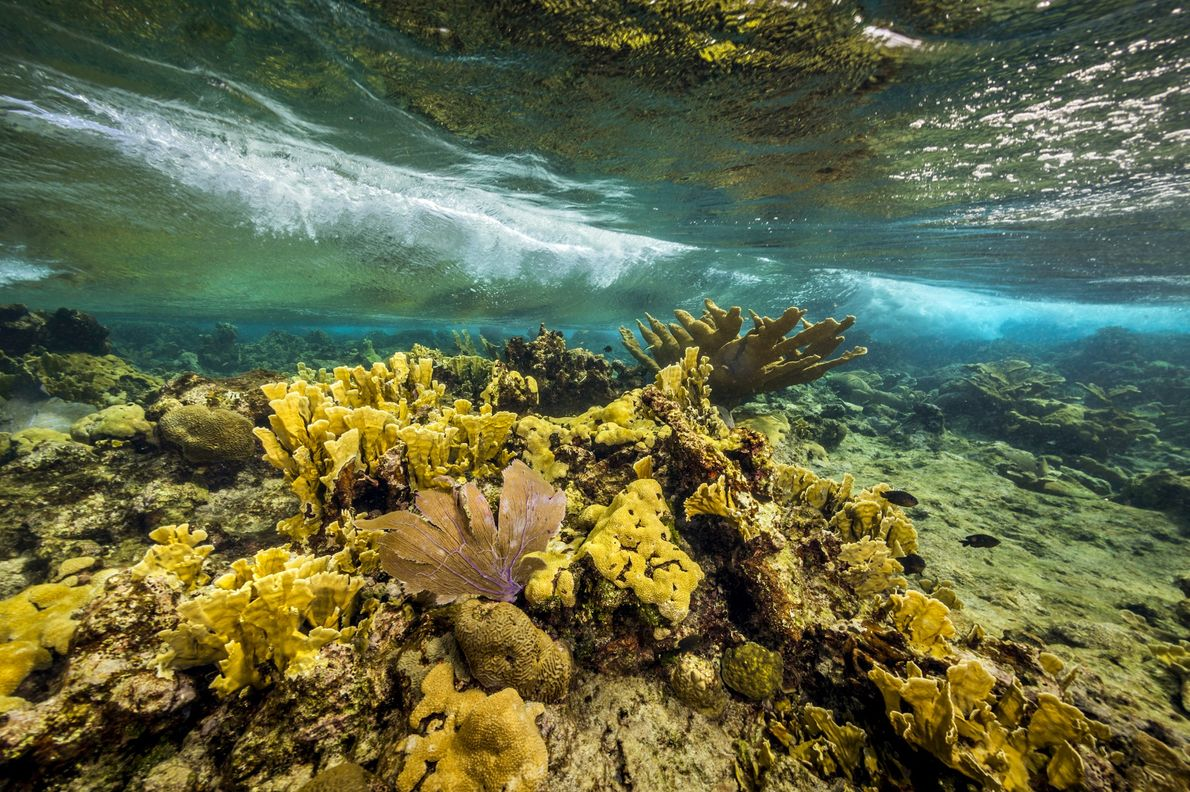 O Monumento Nacional do Recife de Buck Island, nas Ilhas Virgens dos EUA, protege corais-elkhorn, corais-cérebro ...