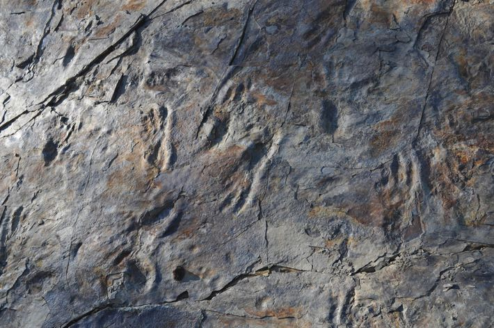 As pegadas encontradas no sítio arqueológico de Sacheon Jahye-ri, na Coreia do Sul, parecem ter sido ...
