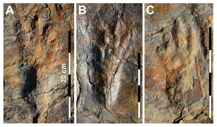 Imagens das pegadas bem preservadas do Batrachopus grandis, um parente dos crocodilos.