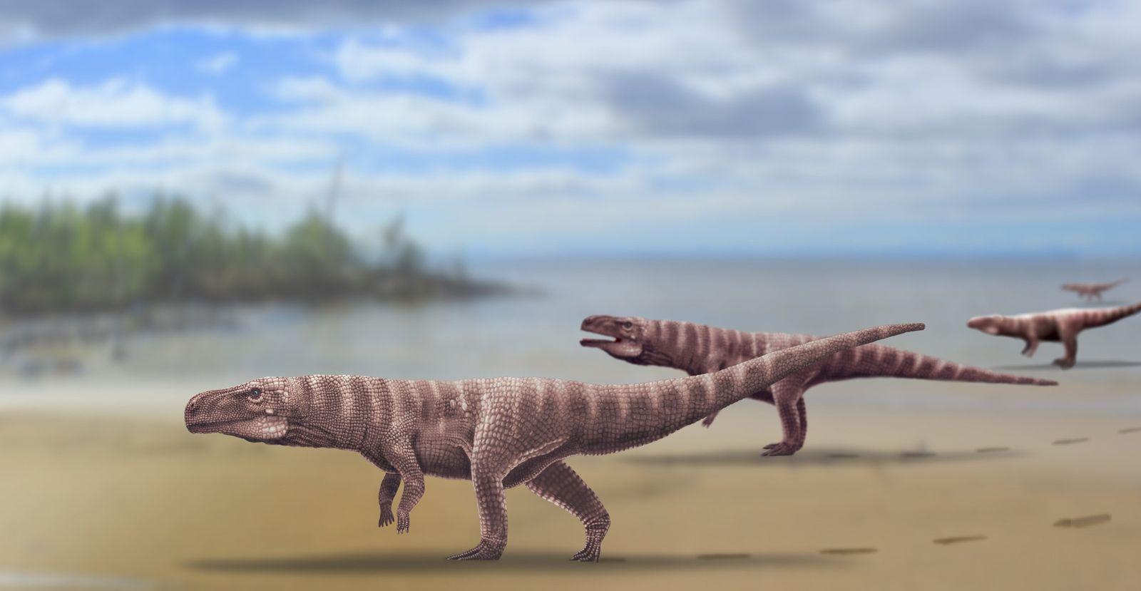 Parente Misterioso de Crocodilo Pode Ter Andado Sobre Duas Patas