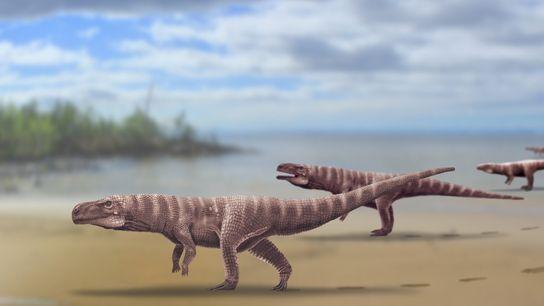 Reconstrução do Batrachopus grandis, uma proposta para o crocodilomorfo que viveu há mais de 110 milhões ...