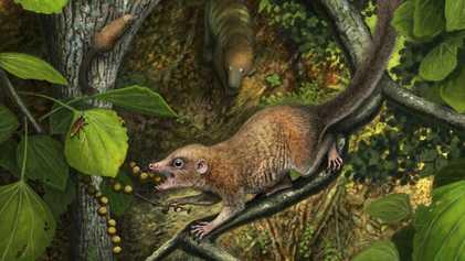 Será que os antigos primatas caminharam ao lado do T. rex? Novas evidências suportam esta teoria.