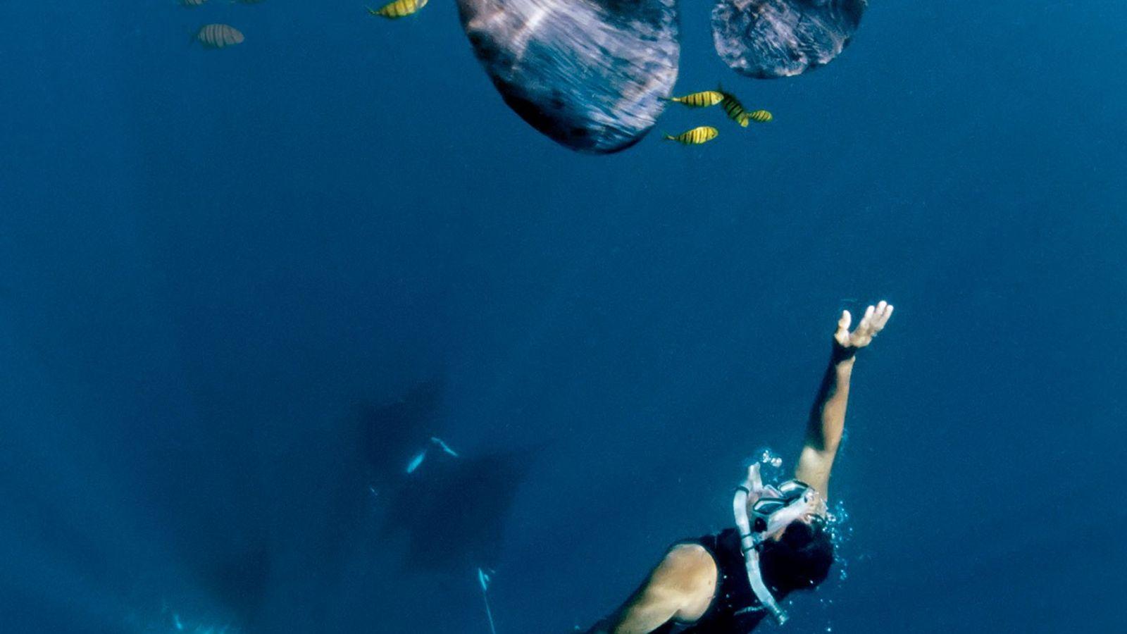 Um praticante de snorkeling nada com uma manta.