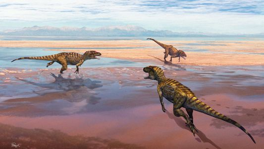 Pegadas de dinossauros carnívoros descobertas no Cabo Mondego