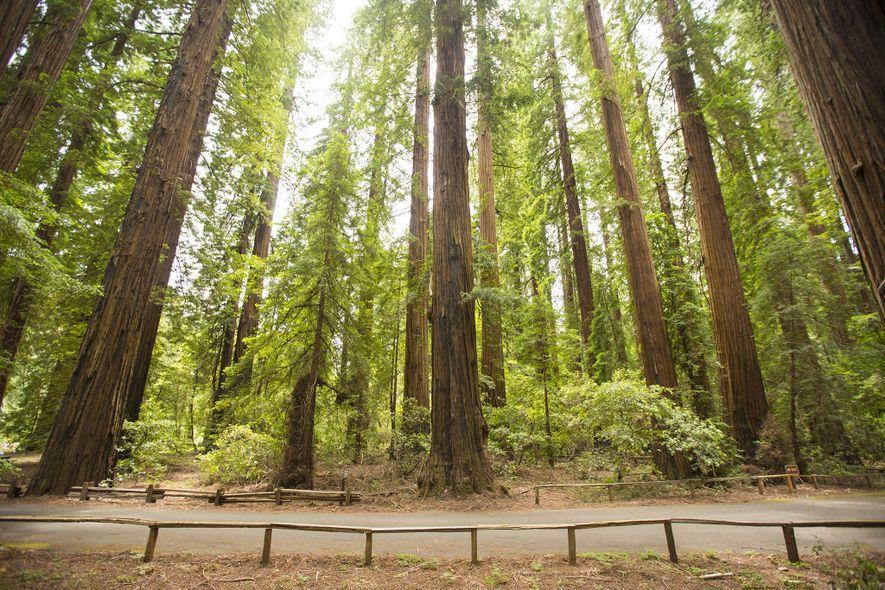 Um dos primeiros parques de sequoias da Califórnia, o Parque Estatal de Richardson, foi fundado em ...