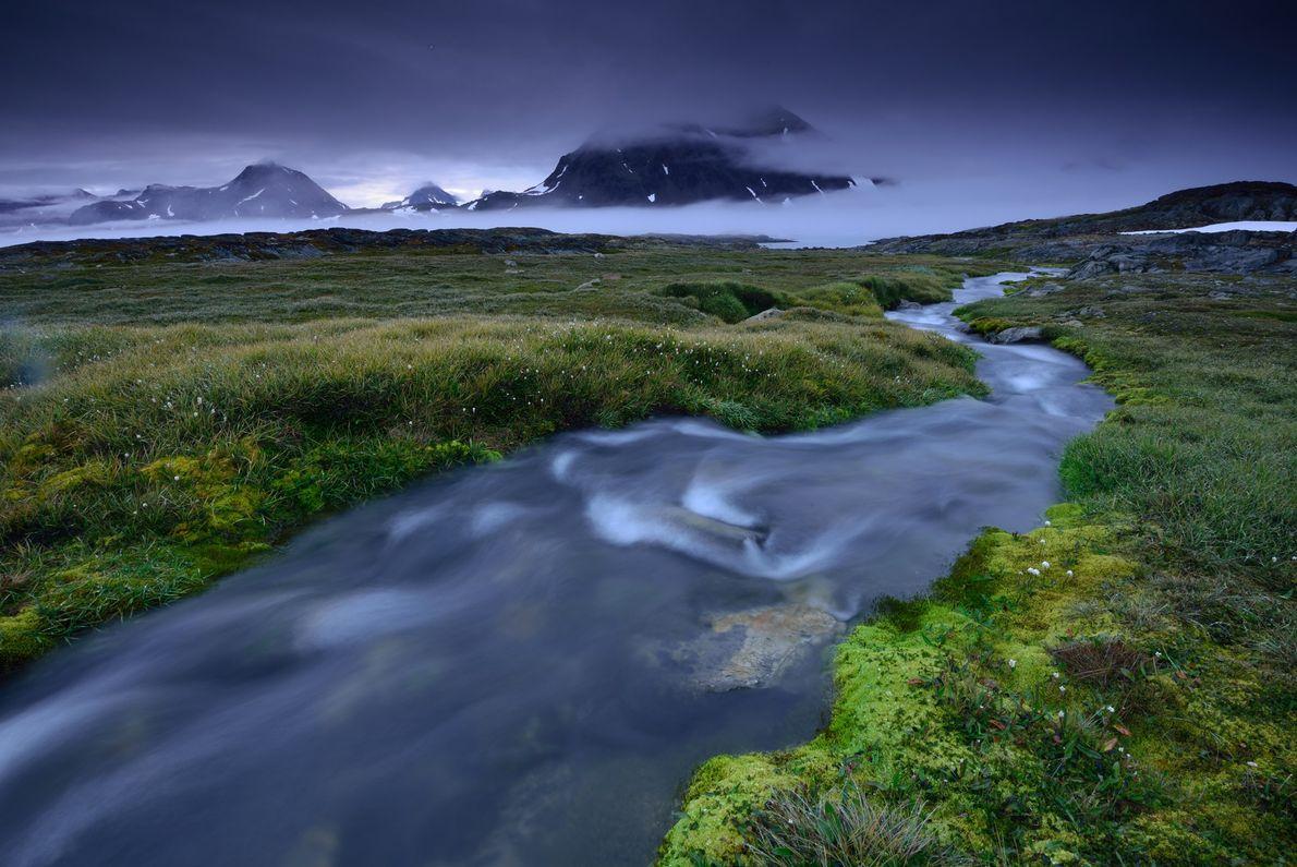 Rebentos de flora verde ao longo das margens do rio, numa pequena ilha no sudeste da ...