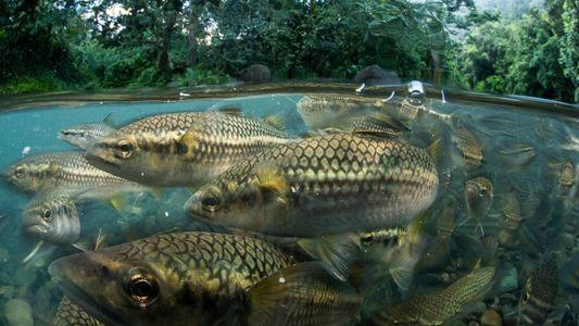 Mergulhe no Mundo Esquecido dos Animais de Água Doce