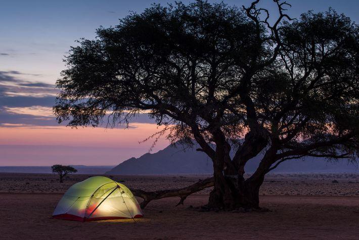 Tenda montada junto a uma árvore na orla do deserto da Namíbia