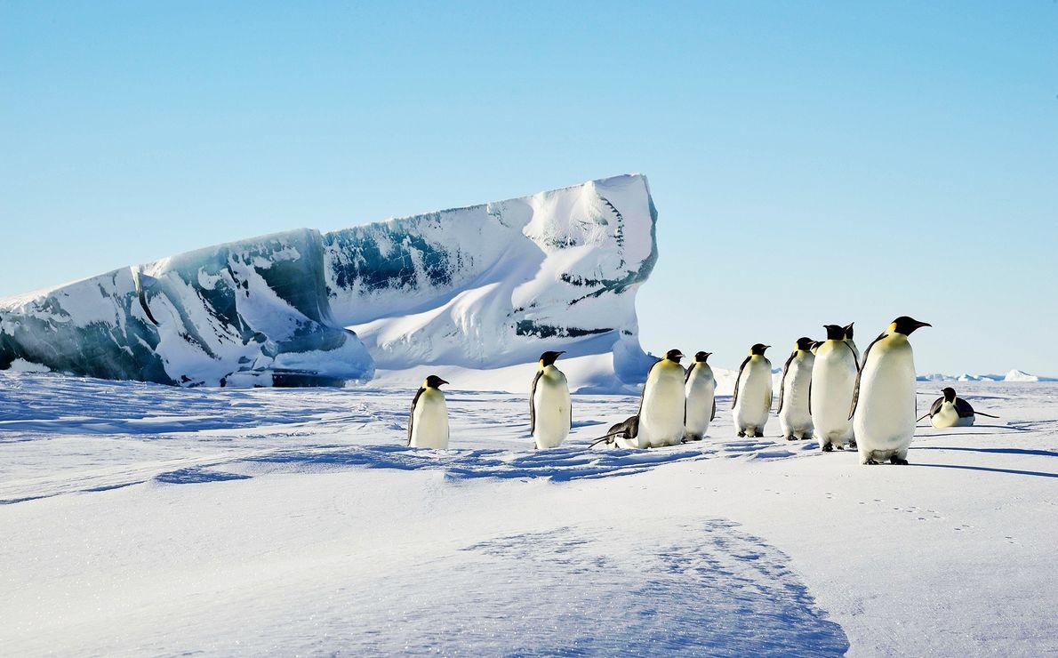 Um icebergue verde ergue-se na neve, perto de um grupo de pinguins-imperador.