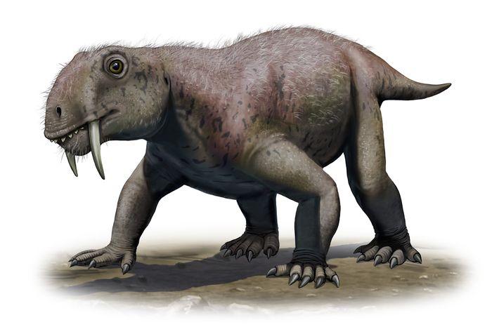 Esta ilustração mostra o protomamífero Tiarajudens exccentricus, o primeiro animal com dentes de sabre de que ...