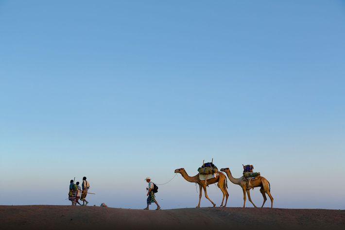 Salopek, com guias, conduz um par de camelos de carga, A'urta e Suma'atuli, através do deserto ...