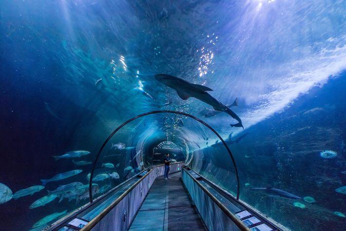 Dois túneis subaquáticos são a principal atração do aquário da baía de San Francisco.