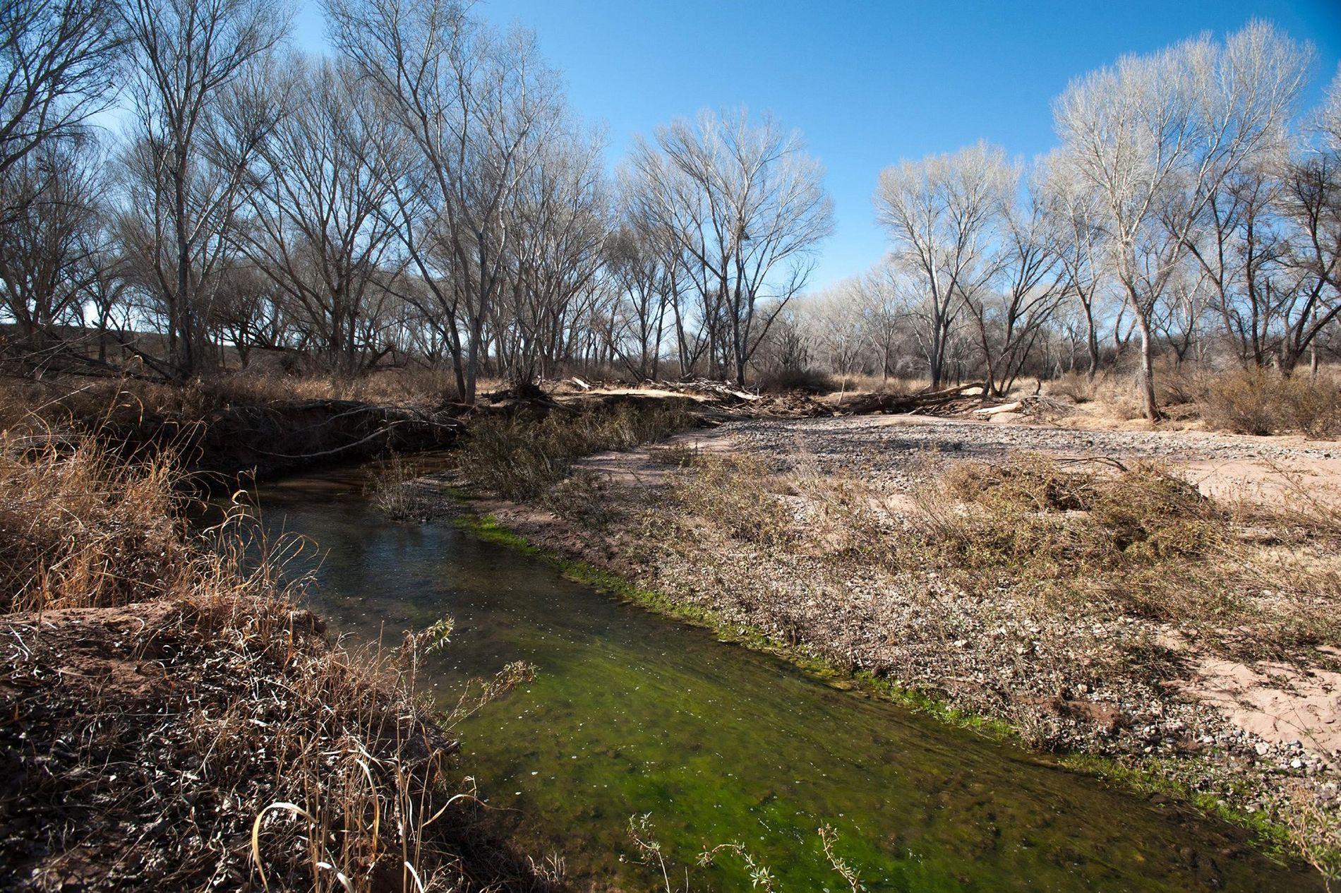 O rio San Pedro, no Arizona, viu os seus fluxos diminuírem durante as últimas décadas devido ...