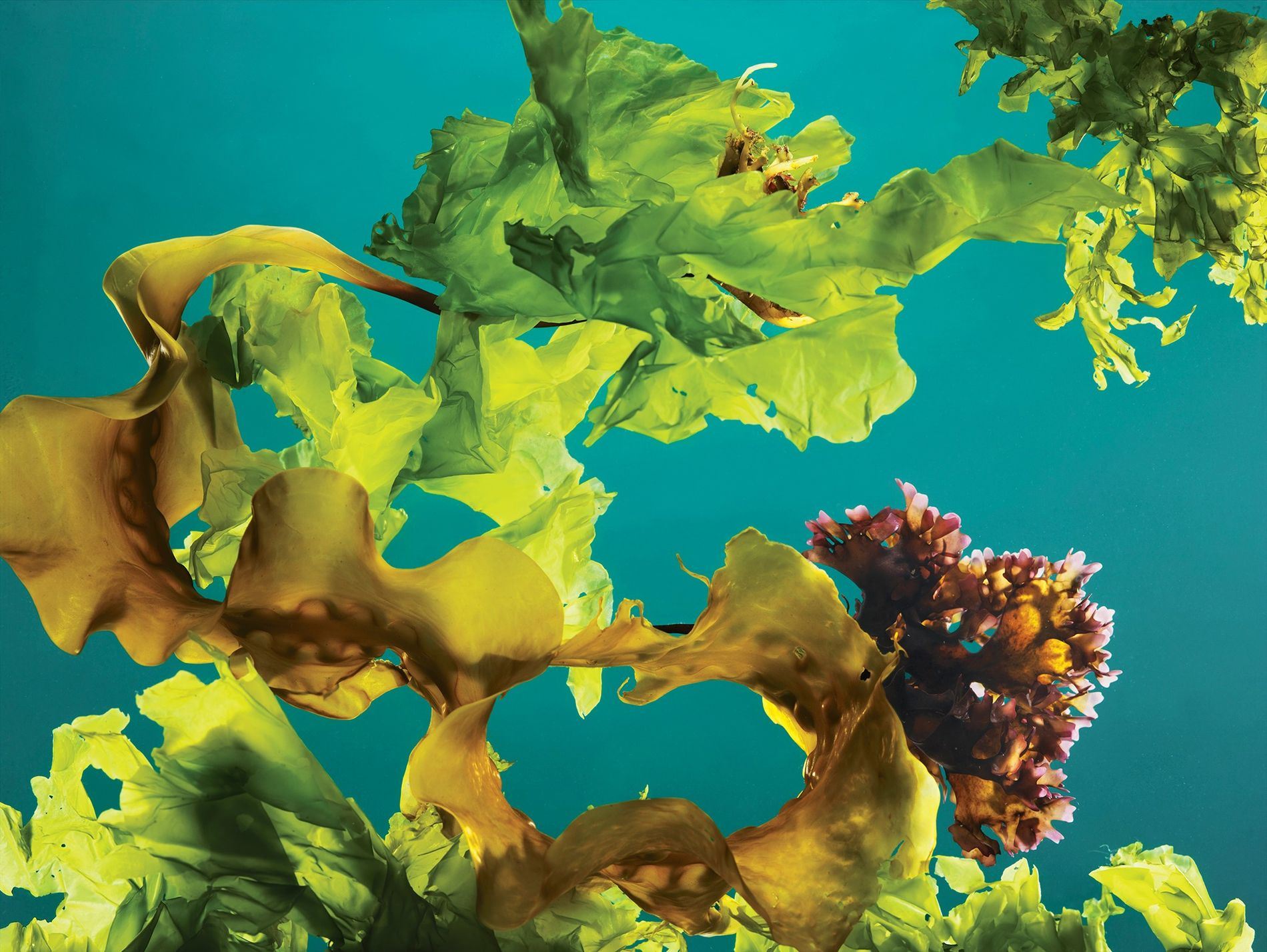 Algas Marinhas Podem Ajudar a Combater Alterações Climáticas