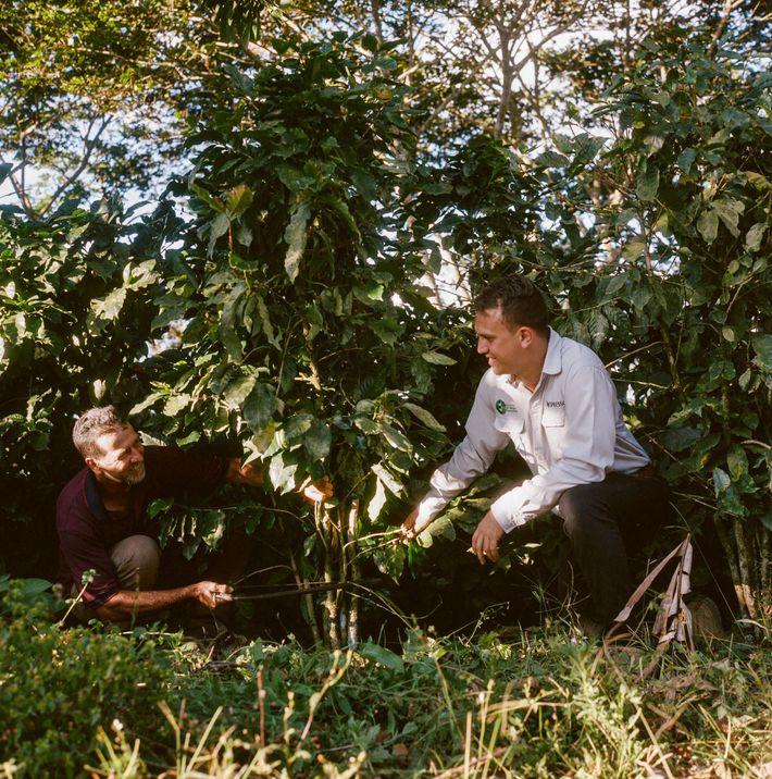 Um produtor de café da Costa Rica caminha a passos largos rumo à sustentabilidade total