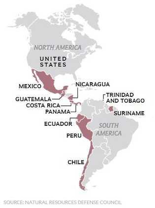 Estes 10 países enviam barbatanas de tubarão para Hong Kong através dos EUA.