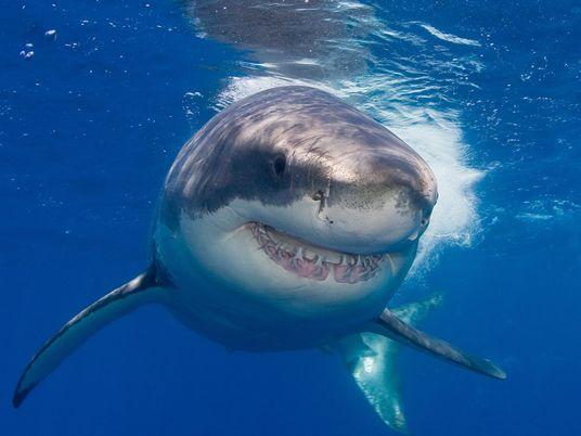 Ajude as Crianças a Superar o Medo de Tubarões e Outros Animais 'Assustadores'